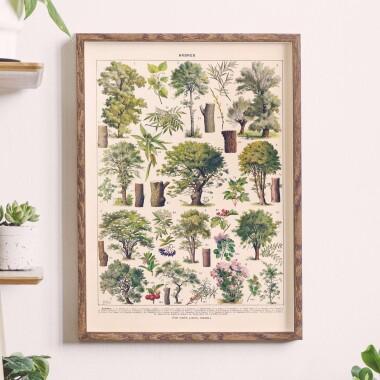 """Reprint grafiki Adolphe Millot """"Arbres"""". Infografika z gatunkami drzew i krzewów liściastych."""