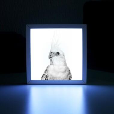 lighbox-lampka--nocna-z-papuga